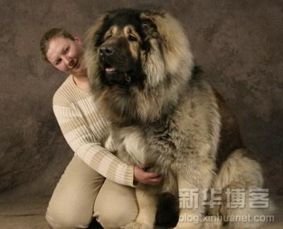 หมาที่ใหญ่ที่สุดในโลก