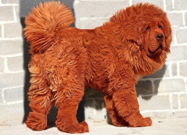 สุนัขที่แพงที่สุดในโลก 2012