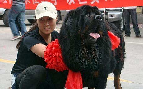 หมาที่แพงที่สุดในโลก 2009