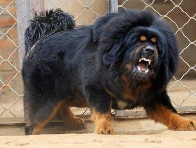 หมาที่แพงที่สุดในโลก